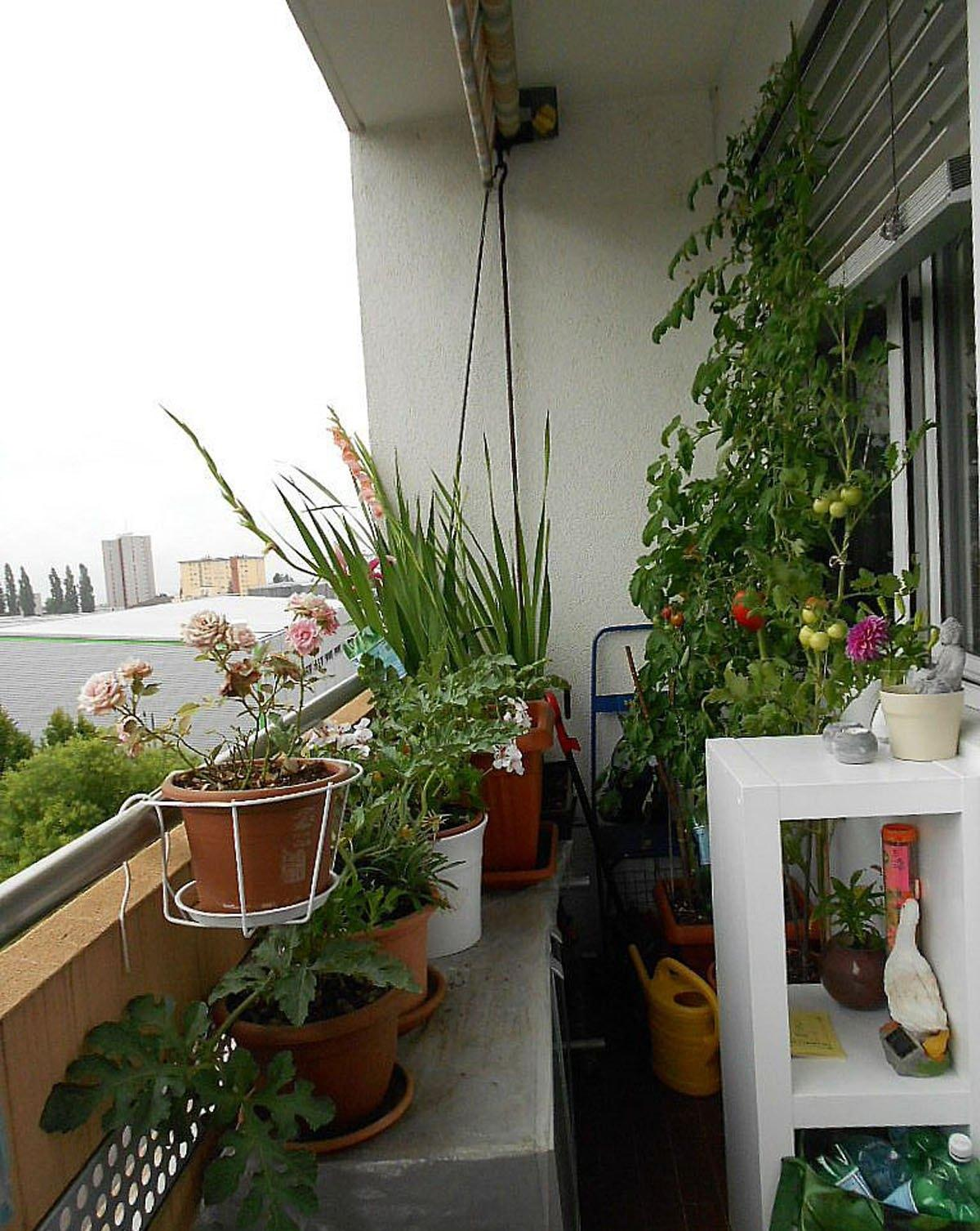 Fresh balcony with small kitchen garden home inspiring for Small kitchen garden design