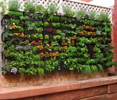 haning small kitchen garden for small space