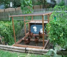 small kitchen garden with small kitchen cage