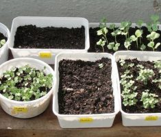 some ideas to make small kitchen garden with unused plastic jar etc