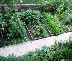 topview for small kitchen garden place