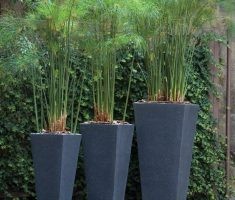 beautifull small tall modern garden pots