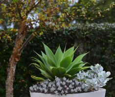 beauty modern garden pots planter