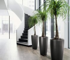 elegant modern garden pots for indoor room interior