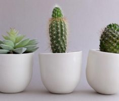 enchanint small modern garden pots ceramic materials for cactus