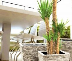 modern garden pots for palm tree