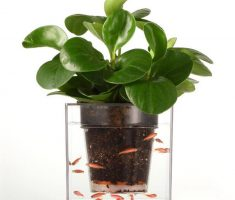 modern garden pots with tiny aquarium one place
