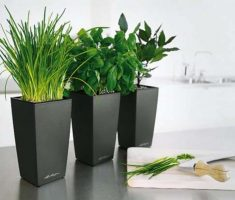 small modern garden pots for indoor