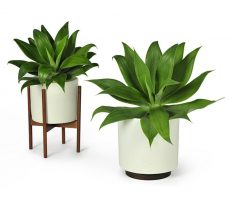 tiny cute modern garden pots for indoor decor
