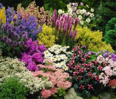 exclusive flowers colorful landscaping ideas for front yard