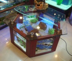 DIY Hexagon Coffee Table Aquarium Design