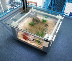 Minimalist Square Coffee Table Aquarium Idea